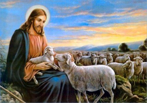 Đức cha Giuse Vũ Văn Thiên - Bài giảng Chúa nhật XVI Thường niên B: Vị Mục tử chạnh lòng thương
