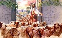 Tôi là cửa cho chiên ra vào (13.5.2019 – Thứ Hai Tuần 4 Phục Sinh)